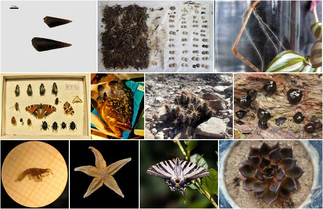 Animal/plant scientific